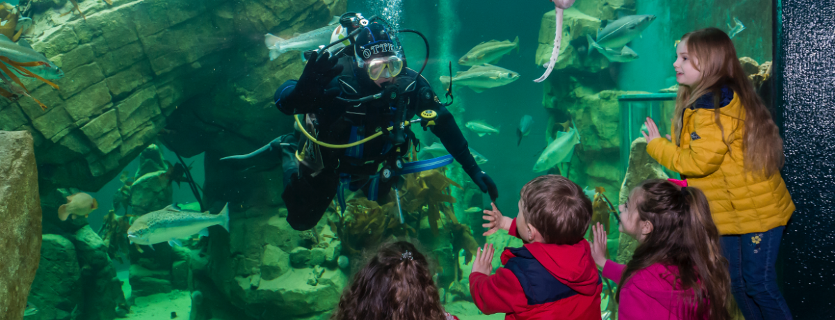 Dive Back In with Macduff Marine Aquarium and TechFest Digital 5th November 2pm