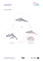 Life Cycles Activity Worksheet 6 Dolphin Thumbnail
