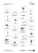 Predators Activity Worksheet 2
