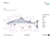 Fish Biology Activity Worksheet 1