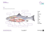 Fish Biology Activity Worksheet 2 Thumbnail
