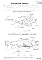 Comparative Anatomy- Bony Fish and Catshark- Internal Thumbnail